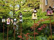 Birdgarden