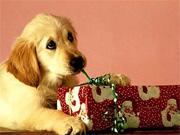 Cuccioli_Natale