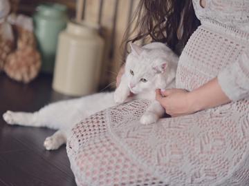 Gatto-gravidanza