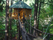 Tree-sleeping-hotel