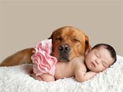 Cani-Neonati
