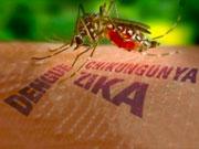 Zika-gravidanza